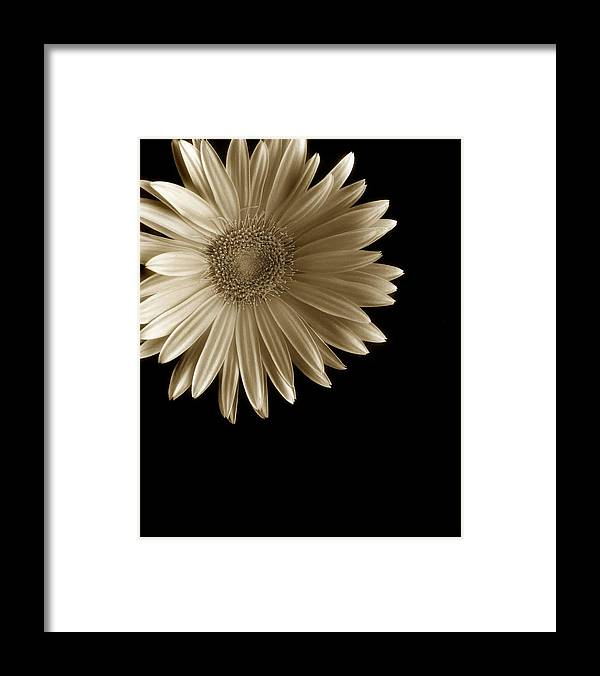 Flower Framed Print featuring the photograph Buttery by Mark Fuller