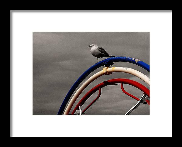 Cape Cod Framed Print featuring the photograph Bw Gull On Rwb by David DeCenzo