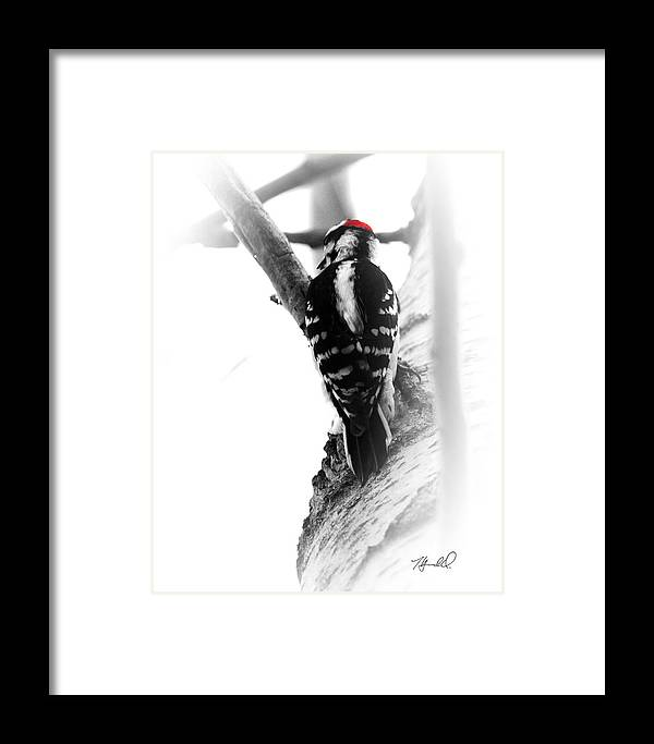 Black And White Framed Print featuring the photograph Bw.woodpecker1 by Theresa Heald