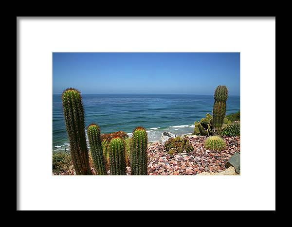 Water's Edge Framed Print featuring the photograph Cacti In Gardens Of Fellowship Of Self by Max Paoli