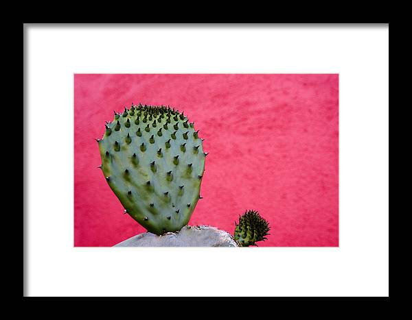 Tucson Framed Print featuring the photograph Cactus And Pink Wall by Carol Leigh