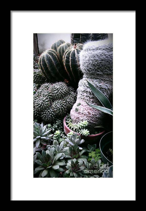 Cactus Family Hairy Dude With 2 Belly Buttons Side View! Framed Print featuring the photograph Cactus Family Hairy Dude by Marlene Williams