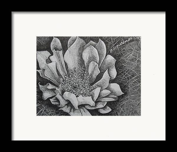 Flowers Framed Print featuring the drawing Cactus Flower by Denis Gloudeman