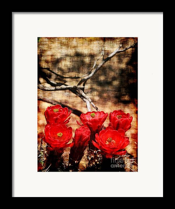 Cactus Framed Print featuring the photograph Cactus Flowers 2 by Julie Lueders
