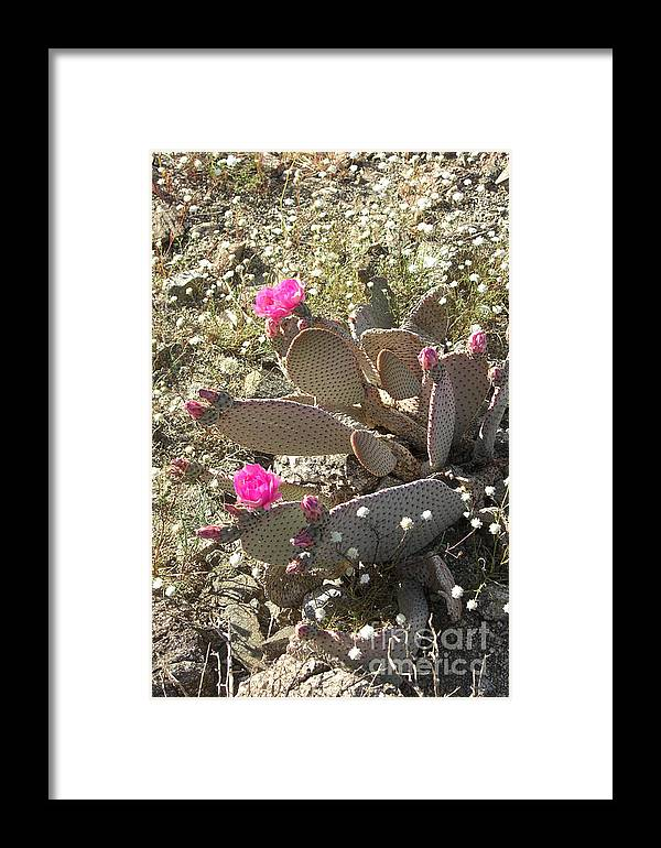 California Framed Print featuring the photograph Cactus Flowers by Deborah Smolinske