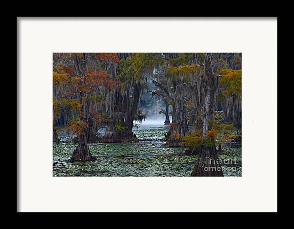 Morning Framed Print featuring the photograph Caddo Lake Morning by Snow White