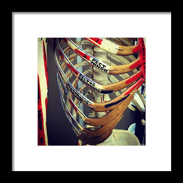 Anatomy Framed Print featuring the photograph Caged by Rachel Harvey