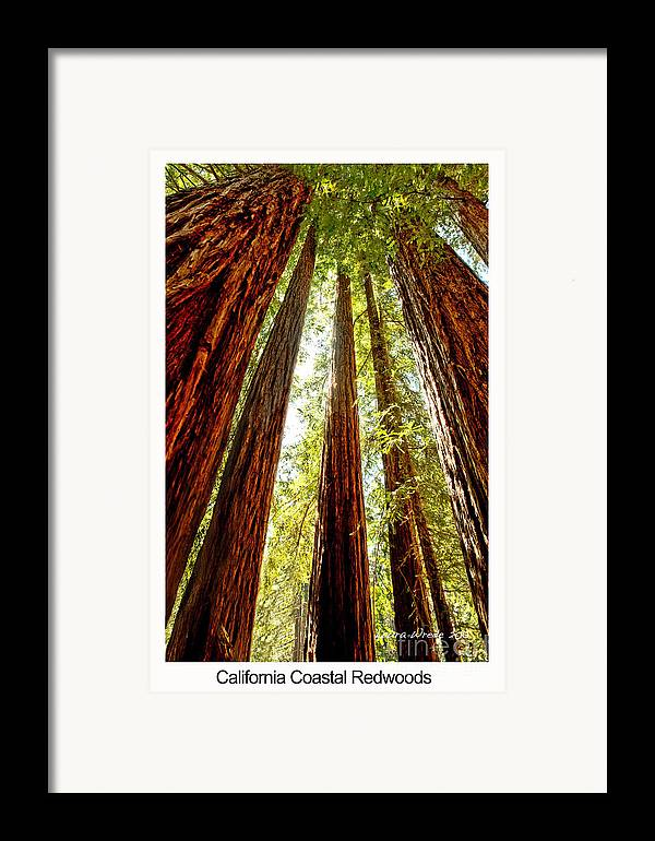 Redwoods Framed Print featuring the photograph California Coastal Redwoods by Artist and Photographer Laura Wrede