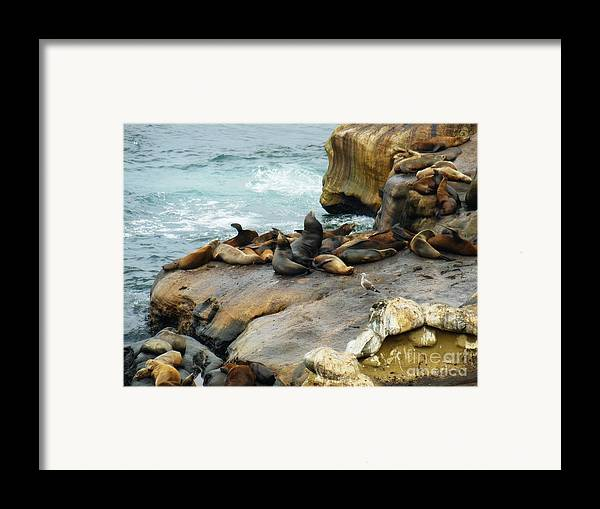 California Dreaming Framed Print featuring the photograph California Dreaming by Mary Machare
