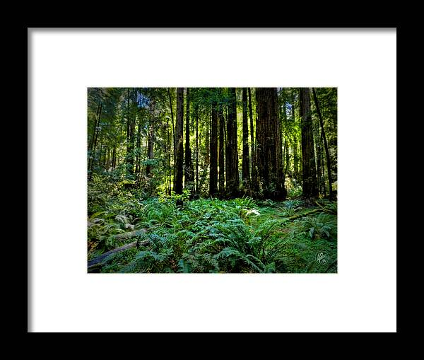 Muir Woods Framed Print featuring the photograph California - Muir Woods 007 by Lance Vaughn
