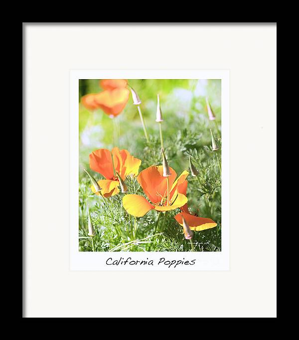 California Poppies Framed Print featuring the photograph California Poppies by Artist and Photographer Laura Wrede