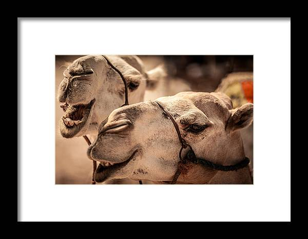 Framed Print featuring the photograph Camel Face by Desislava Panteva