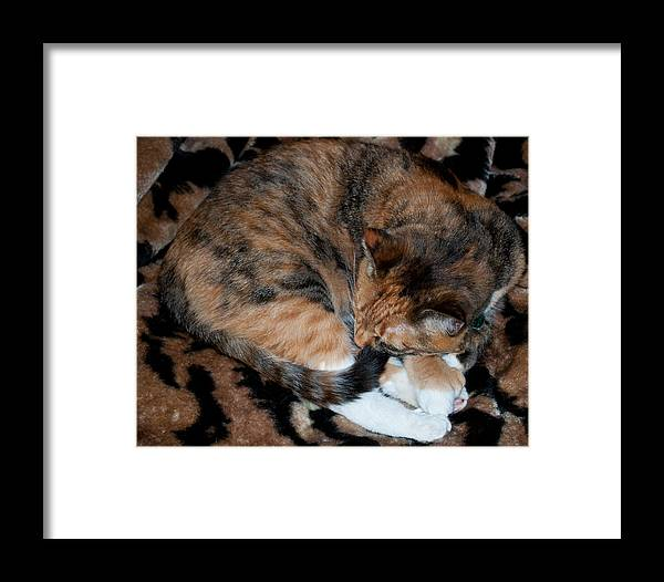 Fur Framed Print featuring the photograph Camouflaged by Tikvah's Hope