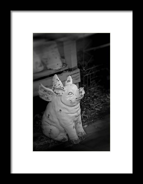 Pig Framed Print featuring the photograph Can A Pig Fly? by Kristi Swift