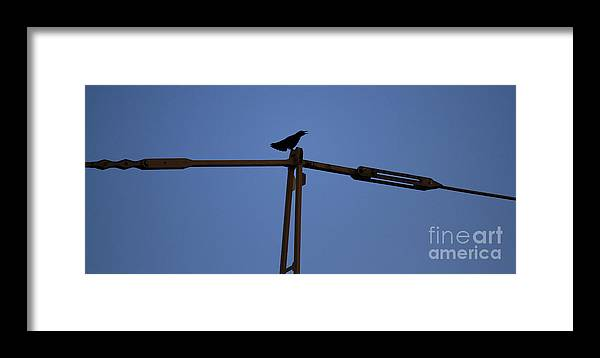 Crane Framed Print featuring the photograph Can You Hear Me by Four Hands Art