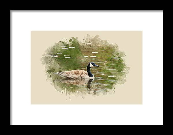 Canada Goose Framed Print featuring the mixed media Canada Goose Watercolor Art by Christina Rollo
