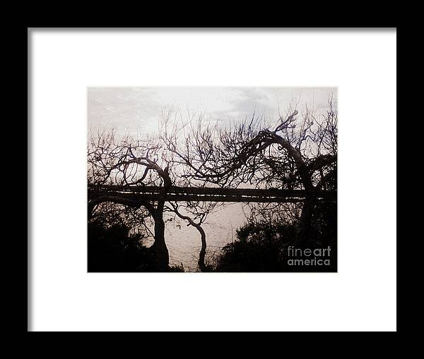 Trees Framed Print featuring the photograph Canaveral Trees I by Heather Brown