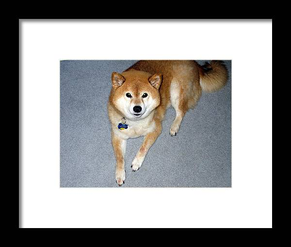 Pet Dog Framed Print featuring the photograph Candy by Dick Willis