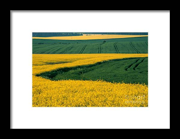 Landscape Framed Print featuring the photograph Canola Field by Eva Kato