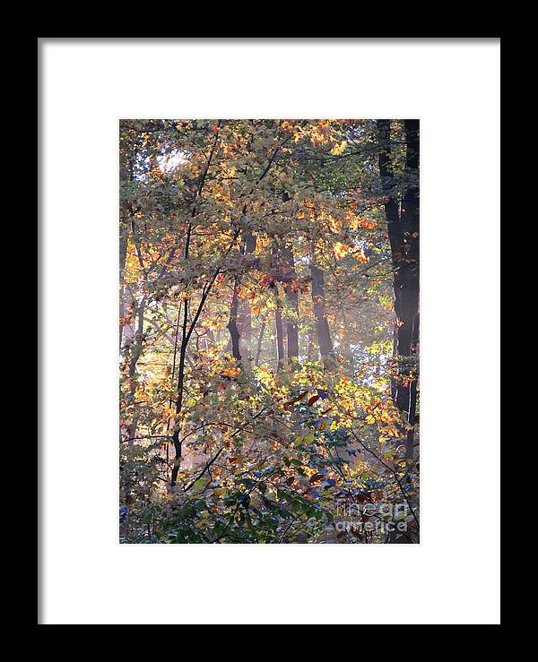 Forest Light Images Woodland Landscapes Forest Photography Images Misty Light Forest Glow Forest Sunrise Misty Morning Forest Canopy Collage Seasonal Forest Prints Nature Prints Nature Photography Autumn Leaves Golden Leaves Arborial Illumination Naturalist Natural Science Scenery Natural Light Forest Fog Fall Forest Indian Summer Prints Maryland Forest Outdoors Maryland Outdoor Recreation Environmental Education Oldgrowth Forest Biodiversity Preservation Wildlife Habitat Conservation Natural Framed Print featuring the photograph Canopy Collage by Joshua Bales