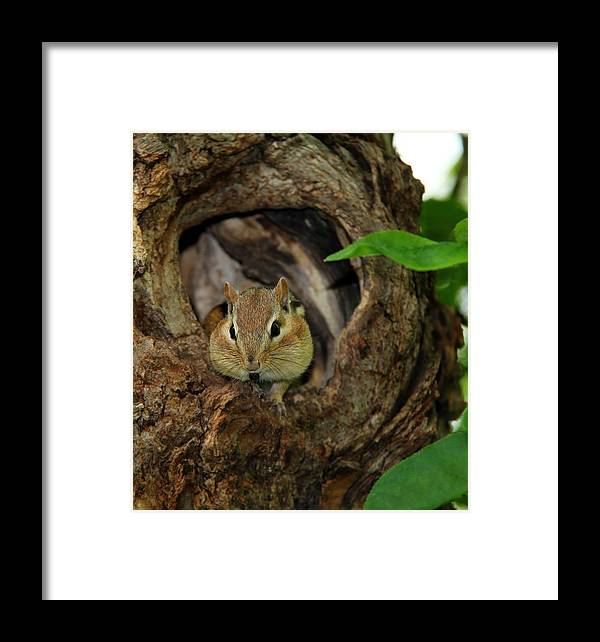 Animal Framed Print featuring the photograph Cant Talk With My Mouth Full by Davandra Cribbie