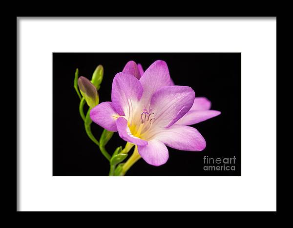 Flower Framed Print featuring the photograph Captivating by Terry Ellis
