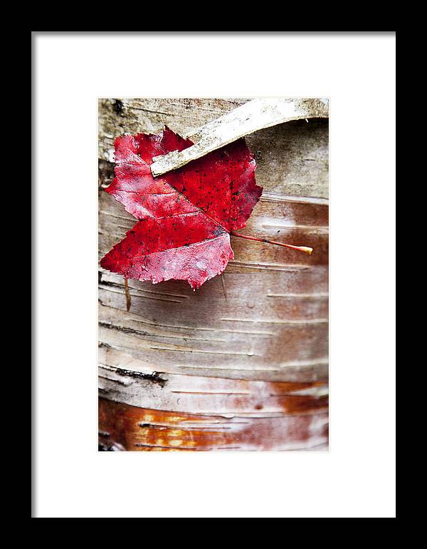 Leaves Framed Print featuring the photograph Captured Color by Don Powers