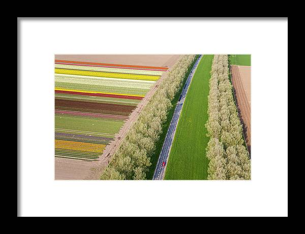 Scenics Framed Print featuring the photograph Car On Road Near Tulip Fields, Holland by Peter Adams