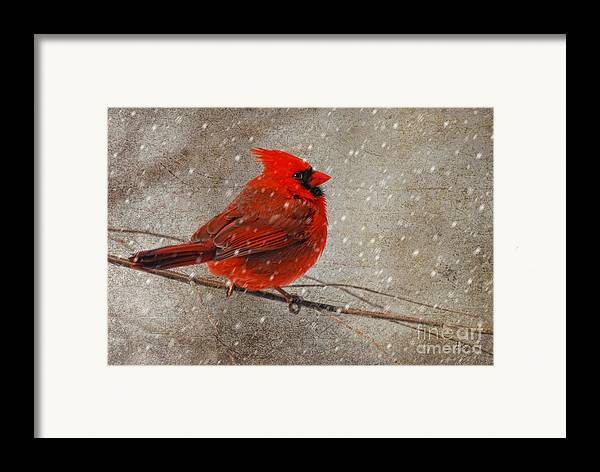 White Christmas Framed Print featuring the photograph Cardinal In Snow by Lois Bryan