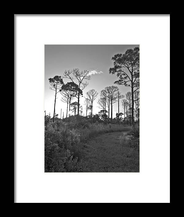 Swflsunsetscenery Framed Print featuring the photograph Carlton Reserve by Tracy Barnard