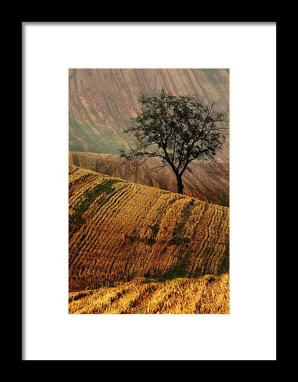 Landscape Framed Print featuring the photograph Carpet Fields Of Moravia by Jaroslaw Blaminsky