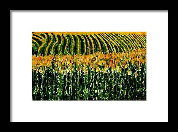 Corn Framed Print featuring the painting Cash Crop Corn by Gregory Allen Page