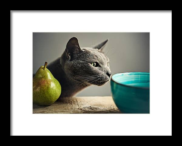 Cat Framed Print featuring the photograph Cat and Pears by Nailia Schwarz