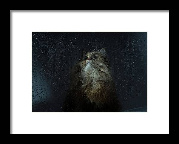 Pets Framed Print featuring the photograph Cat By Rainy Window by Benjamin Torode