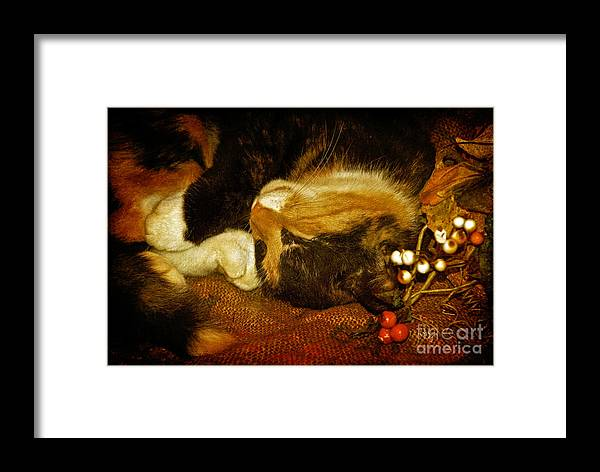 Cat Framed Print featuring the photograph Cat Catnapping by Lois Bryan