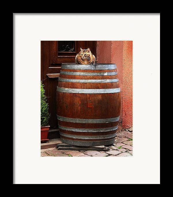 Cat Framed Print featuring the photograph Cat Guarding A Wine Barrel In Alsace by Greg Matchick