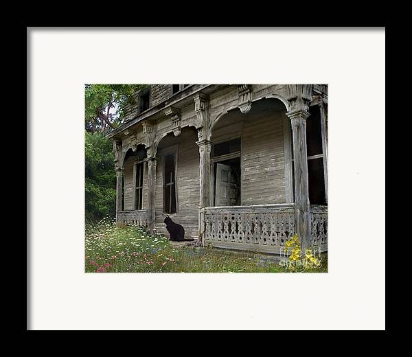 Rotting Framed Print featuring the photograph Cat House 1 by Tom Straub