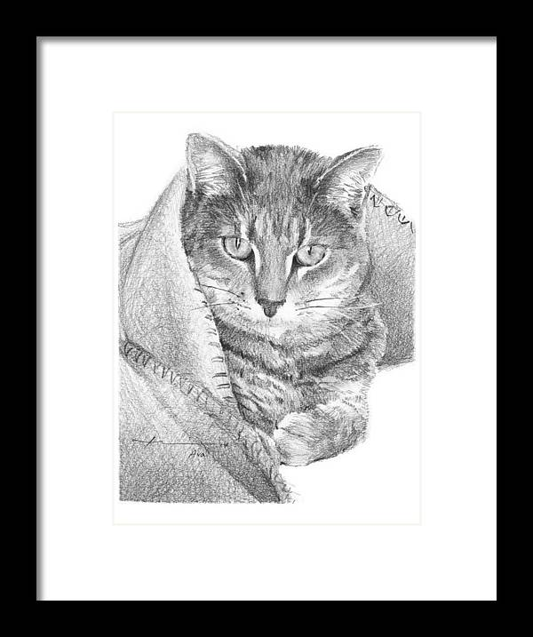 <a Href=http://miketheuer.com Target =_blank>www.miketheuer.com</a> Cat In A Blanket Pencil Portrait Framed Print featuring the drawing Cat In A Blanket Pencil Portrait by Mike Theuer