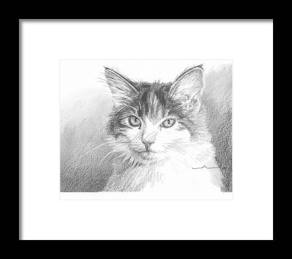 <a Href=http://miketheuer.com Target =_blank>www.miketheuer.com</a> Cat Pencil Portrait Framed Print featuring the drawing Cat Pencil Portrait by Mike Theuer
