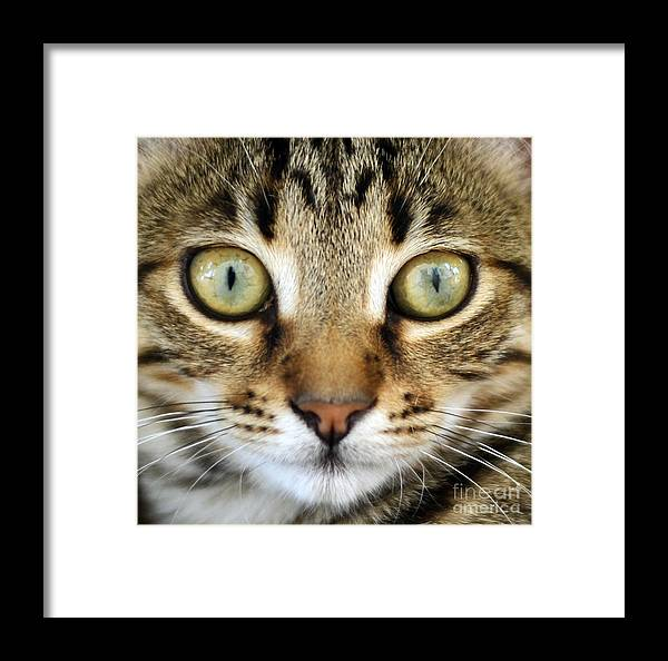 Cat Framed Print featuring the photograph Cat Portrait Macro Shot by Aleksandar Mijatovic
