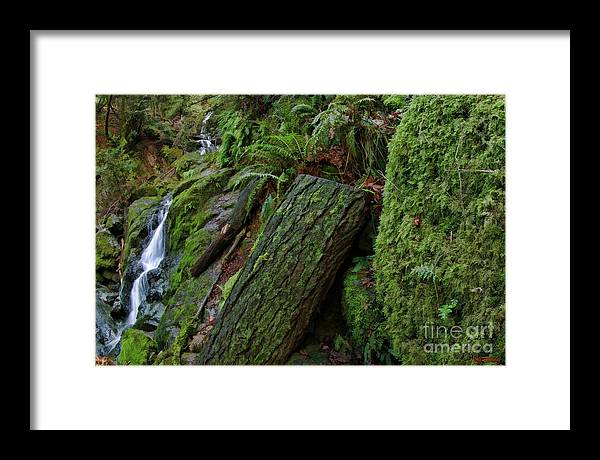 Framed Print featuring the photograph Cataracts Canyon Mossy Log by Blake Richards