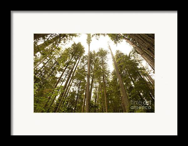 Provincial Park Bc Framed Print featuring the photograph Cathedral Forest by Artist and Photographer Laura Wrede