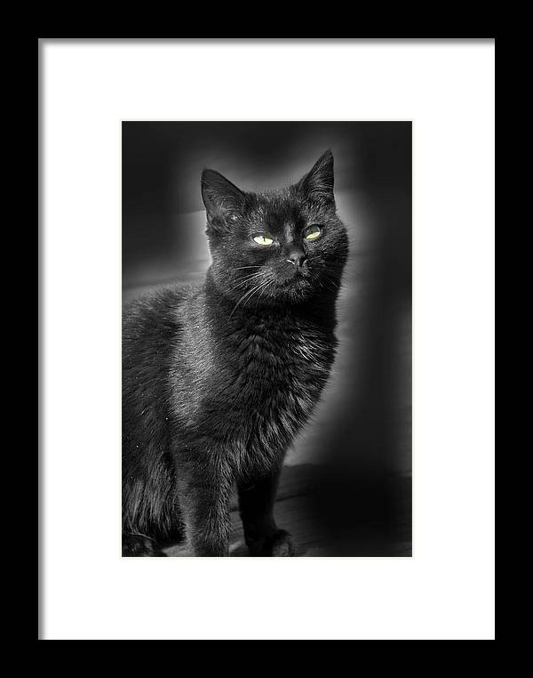 Cats Framed Print featuring the photograph Cats 55 by Joyce StJames