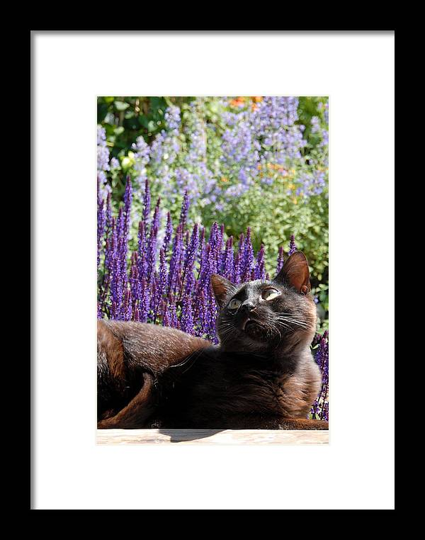 Cats Framed Print featuring the photograph Cats 56 by Joyce StJames