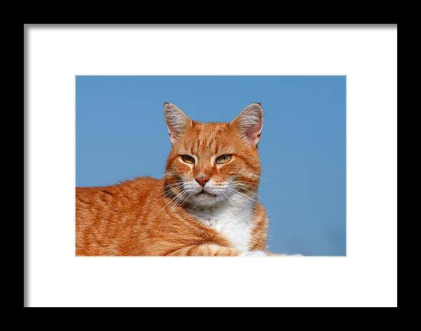 Cats Framed Print featuring the photograph Cats 58 by Joyce StJames