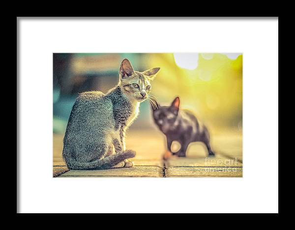 Food Framed Print featuring the photograph cat by Nuriyah
