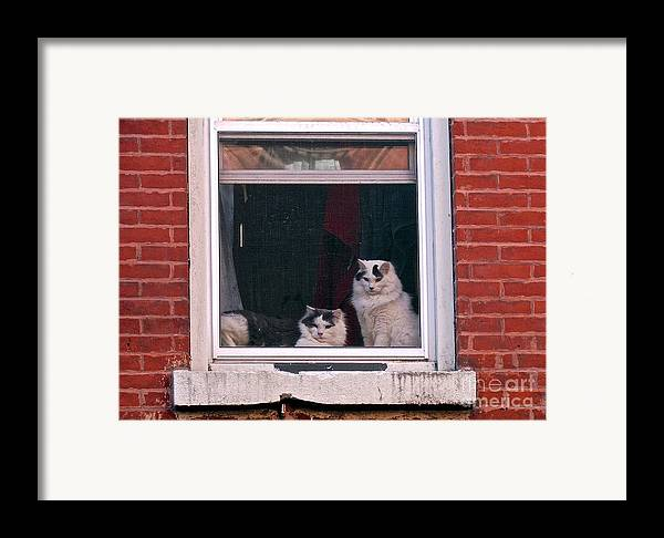 Cats Framed Print featuring the photograph Cats On A Sill by Randi Shenkman