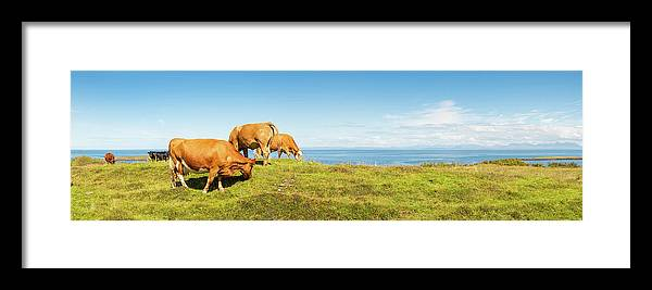 Water's Edge Framed Print featuring the photograph Cattle Grazing In Picturesque Meadow by Fotovoyager