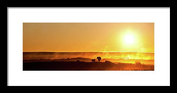 Scenics Framed Print featuring the photograph Cattle Silhouette Panorama by Imaginegolf