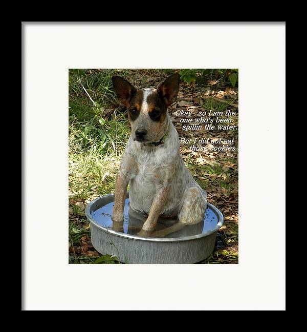 Dog Framed Print featuring the photograph Caught In The Act... by Camille Reichardt